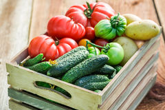 Ripe tomatoes and cucumbers in greenhouse Stock Photo