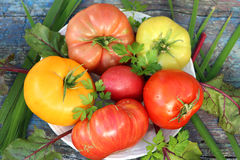 Ripe tomatoes of different colors and varieties. Are on the plate Stock Photography