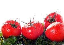 Ripe tomatoes in drops Royalty Free Stock Photography