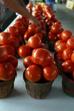 Ripe Tomatoes at Farmer's Market. Outdoor table at Farmer's Market filled with small baskets of ripe, red tomatoes. Farmer refills baskets in background Stock Images