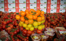 Ripe tomatoes in a greenhouse Stock Photography