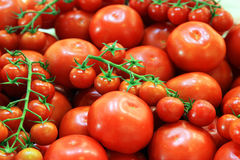 Ripe tomatoes Royalty Free Stock Photo