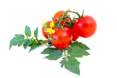 Ripe tomatoes with leaves Stock Photo