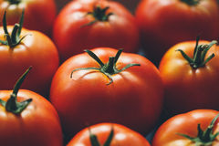 Ripe tomatoes Stock Images