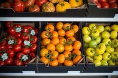 Ripe tomatoes Royalty Free Stock Image