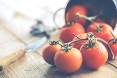 Ripe tomatoes spread Stock Image