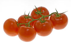 Ripe tomatoes on vine Stock Images