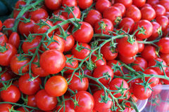 Ripe tomatoes on vine Royalty Free Stock Photos