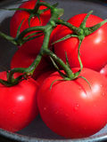 Ripe tomatoes on vine Royalty Free Stock Images