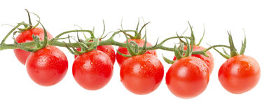 Ripe tomatoes on white background Royalty Free Stock Photography