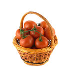 Ripe tomatoes in wicker basket isolated Stock Images