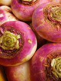 Ripe turnip vegetable close-up 2. Ripe turnip vegetable close-up. Macro Stock Image