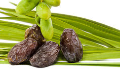 Ripe and unripe dates on the white Royalty Free Stock Photos