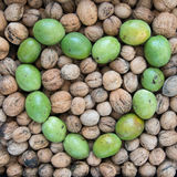 Ripe and unripe walnuts Stock Photos