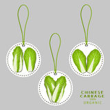 Ripe vegetable chinese cabbage Stock Photography
