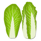Ripe vegetable chinese cabbage Stock Photos