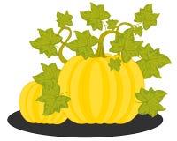 Ripe vegetable melon on white background is insulated. Vector illustration of the ripe vegetable melon in garden stock illustration