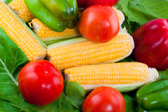 Ripe vegetables Royalty Free Stock Photos