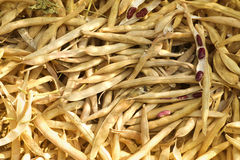 Ripe vegetables bean pods Stock Photos