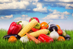 Ripe vegetables on green grass Stock Image