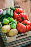 Ripe vegetables in greenhouse Royalty Free Stock Photos