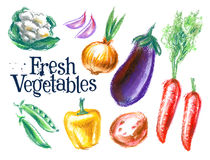 Ripe vegetables vector logo design template Stock Images