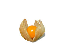 Ripe vibrant yellow Cape gooseberry in opened calyx isolated on white background Royalty Free Stock Image