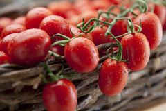 Ripe vine tomatoes Stock Photo