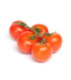 Vine Tomatoes Stock Image