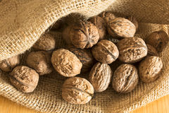 Ripe walnuts in a jute sack Stock Images