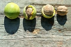 Ripe walnuts on wooden background top view royalty free stock photos