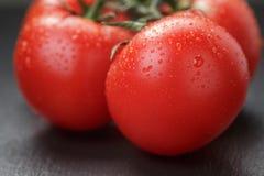 Ripe washed tomatoes on vine on slate background Stock Photos