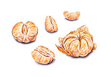Ripe watercolor peeled tangerines. Handwork. Tropical fruits. Healthy food. Set for design Royalty Free Stock Image