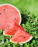 Ripe watermelon on green grass Royalty Free Stock Image