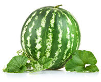 Ripe watermelon with green leaf Royalty Free Stock Photography