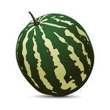 Ripe Watermelon on white background Royalty Free Stock Photography