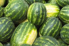 Ripe watermelons lie in the fresh air for sale. Close-up. Russia. Autumn: hot, sunny day stock photography