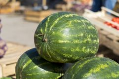 Ripe watermelons lie in the fresh air for sale. Close-up. Russia. Autumn: hot, sunny day royalty free stock photography