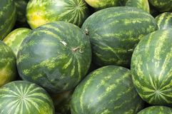 Ripe watermelons lie in the fresh air for sale. Close-up. Russia. Autumn: hot, sunny day stock photo