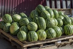 Ripe watermelons lie in the fresh air for sale. Close-up. stock photos