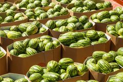 Ripe watermelons packed in cardboard boxes for delivery to the store royalty free stock photography