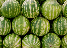 Ripe watermelons for sale Stock Image