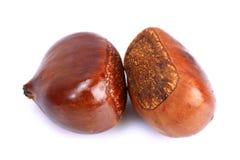 Ripe Wet Chestnuts Stock Image