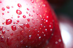Ripe wet plum Royalty Free Stock Photography