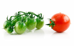 Ripe Wet Red and Green Tomatoes Isolated on White Stock Image