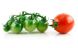 Ripe Wet Red and Green Tomatoes Isolated on White Stock Photography