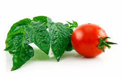 Ripe Wet Red Tomato with Green Leafs Isolated. On White Background Stock Photo