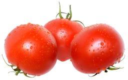 Ripe wet three tomato isolated. On a white background Royalty Free Stock Image
