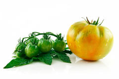 Ripe Wet Yellow and Green Tomatoes Isolated Royalty Free Stock Photos