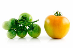Ripe Wet Yellow and Green Tomatoes Isolated Royalty Free Stock Photography